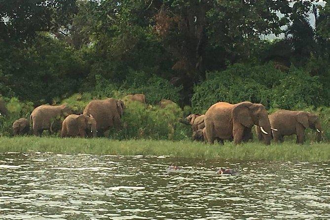 elephant cattle