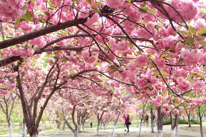 Beijing Private Cherry Blossom Sightseeing and Summer Palace Tour