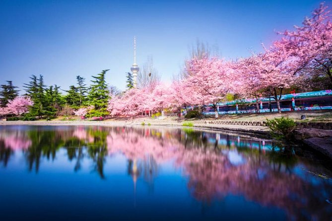 Beijing Cherry Blossom Walking Tour in Yuyuantan Park photo 2