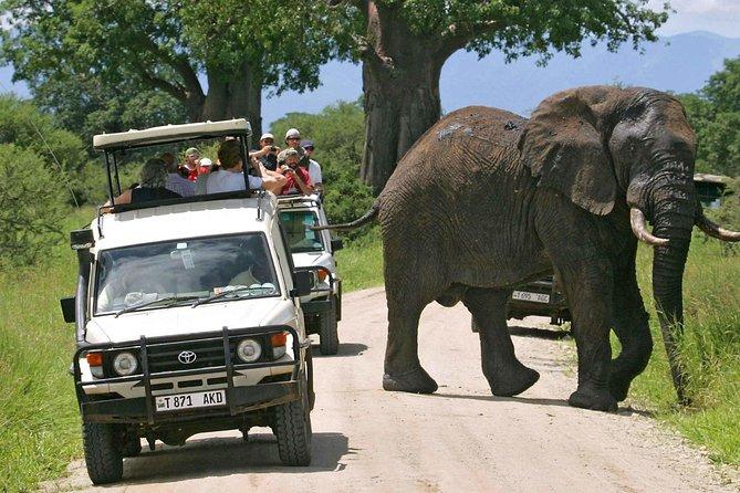 Southern Tanzania Safari 5 Days Mikumi & Udzungwa Hikking