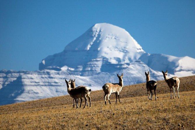 14 Days Lhasa and Mt Kalaish Pilgrimage Trek Group Tour