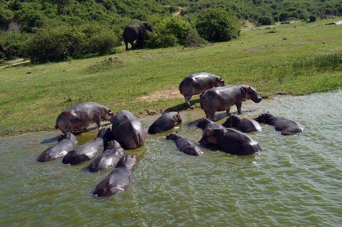 Uganda The Pearl of Africa Safari 9 days 8 nights