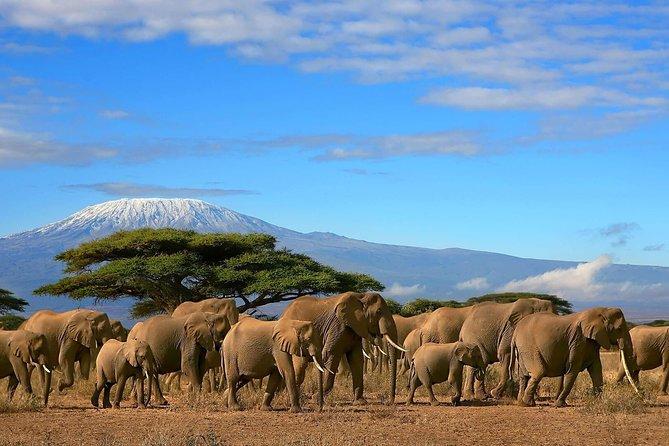 Kenya, Tanzania, Uganda East Africa Safari 23 Days, 22 Nights