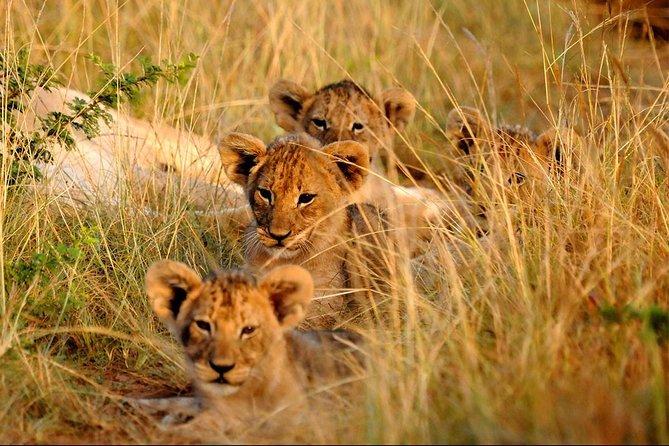 Uganda Safari Wildlife and Cultural Tour 18 Days 17 Nights Tour