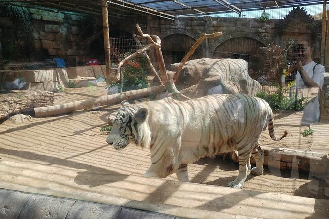 Skip the Line: Ticket to Agüimes Cocodrilo Park Zoo from Gran Canaria photo 7