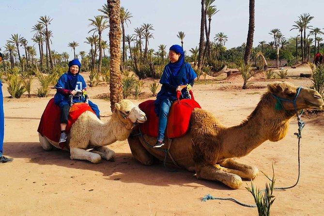 Activities in Marrakech: Camel ride tour