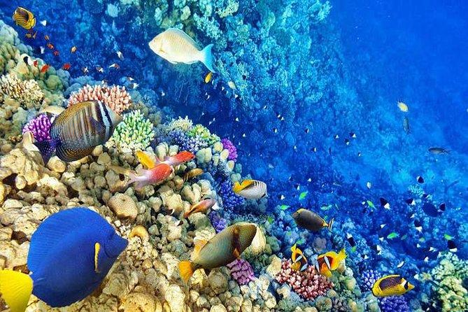 Hurghada Snorkelling