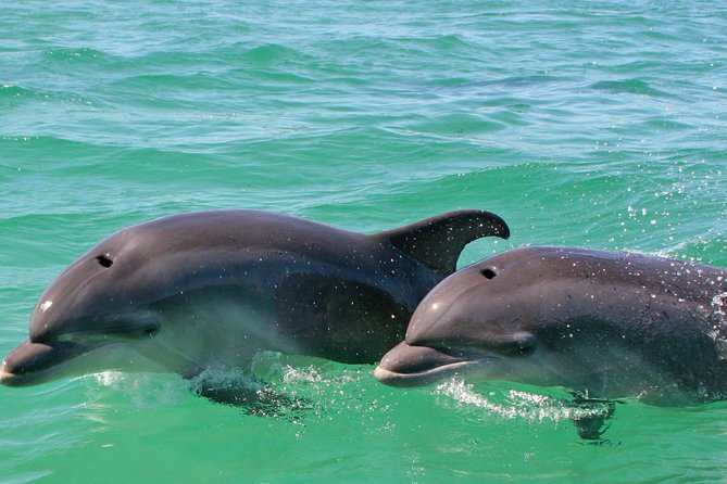 Dolphin watching in the wild photo 1