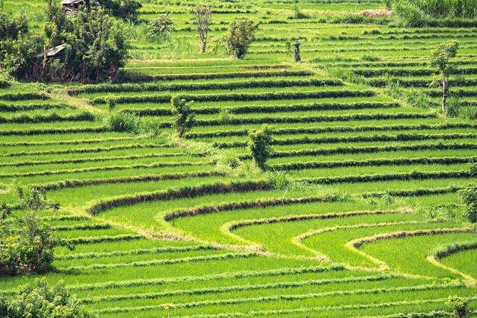Cultural Trekking in Bali - Bali Aga Trek