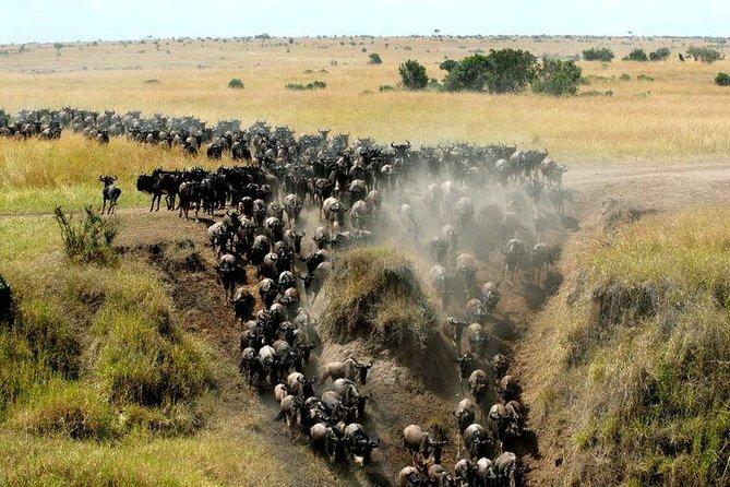 12 Days Kenya And Tanzania Safari