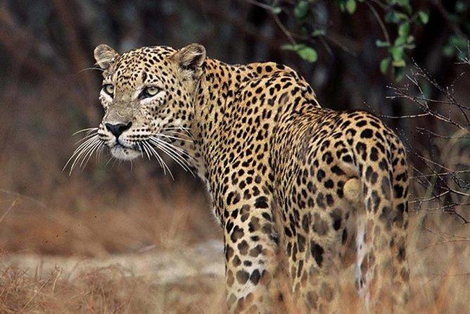 Minneriya National Park Safari