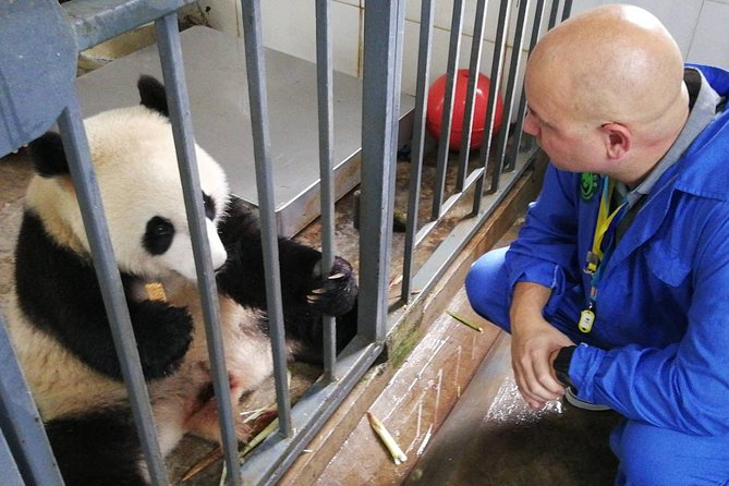 Dujiangyan Panda Base and Volunteer Project 1 day tour