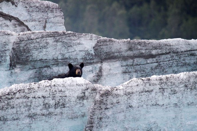 Bears, Trains & Icebergs Tour