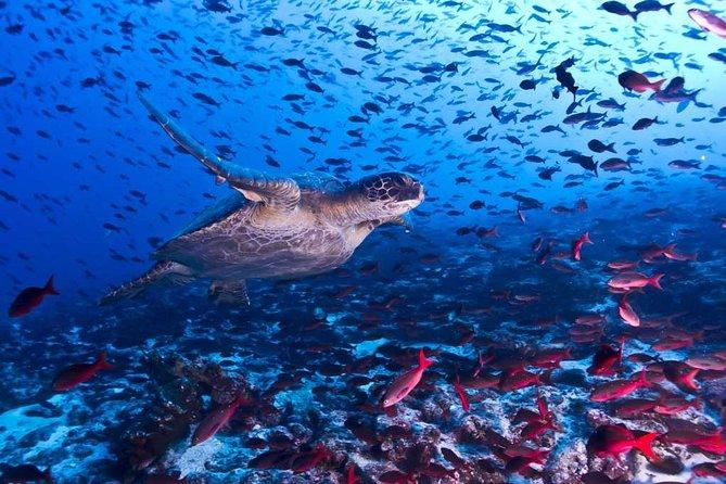 Cahuita and Puerto Vargas snorkeling! (Private)