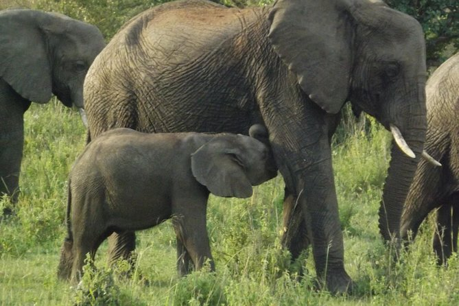 4 hrs Elephant Orphanage and Giraffe Center Tour From your Hotel in Nairobi