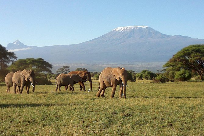 6 Days Masai Mara National Game Reserve Lake Nakuru and Amboseli National Park