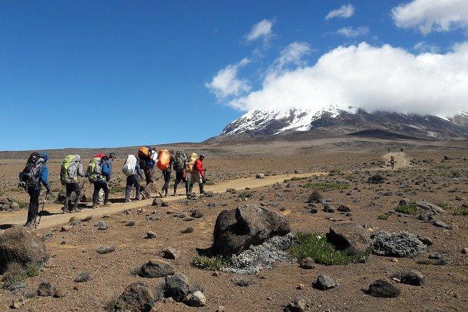 Mt Kilimanjaro Group Climb via Lemosho route (8+2 days)