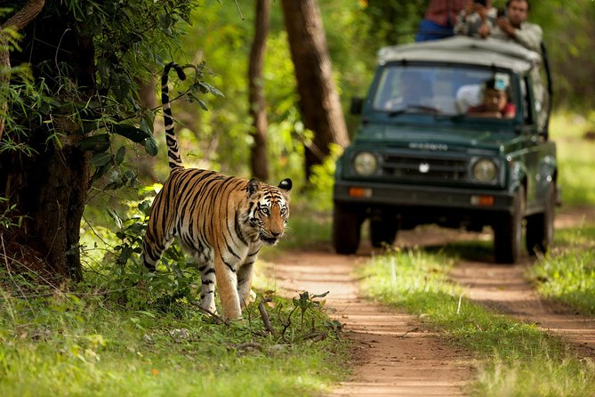 Private 5-Day Ranthambhore Tiger Tour from Delhi with Taj Mahal, Agra and Jaipur