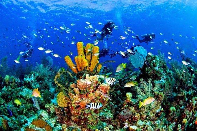 Isla Catalina Vip, Una Experiencia Inolvidable