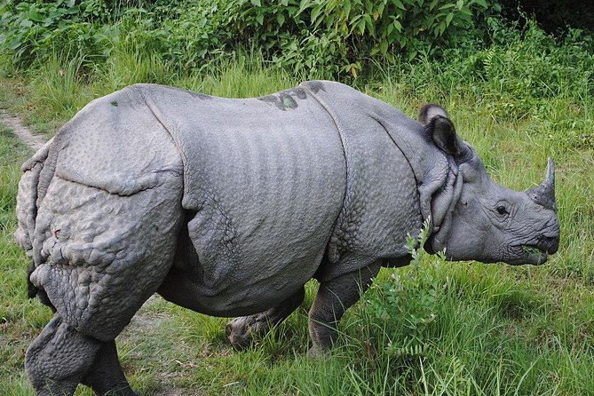 2 Nights Bardia Jungle Safari | Bardia National Park Safari Tour