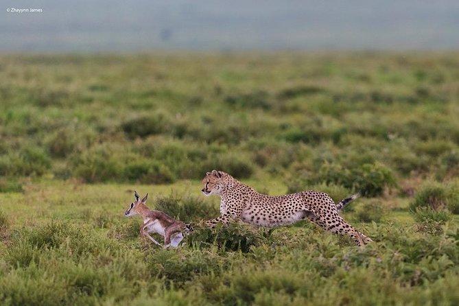6 Days Exclusive Kenya Wildlife Safari Tour 2020/21