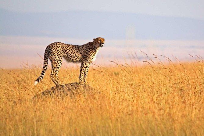 3 Day Safari Tarangire - Ngorongoro Crater - Lake Manyara - Group Joining Tour