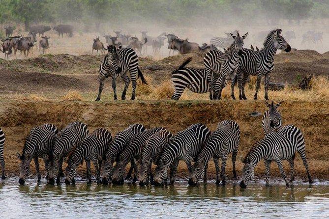5 Day Tarangire - Serengeti - Ngorongoro - Lake Manyara - Group Joining Tour