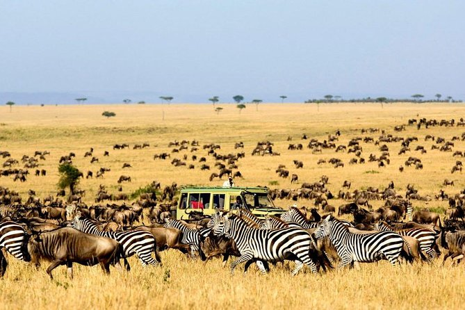 4 Day Camping Tarangire, Serengeti & Ngorongoro Crater - Group Joining Tour