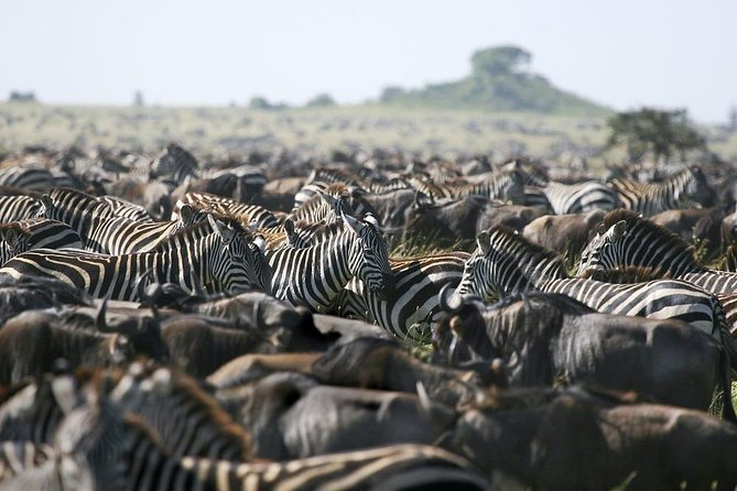 6 Days Tarangire, Lake Manyara, Serengeti & Ngorongoro Crater - Group Join Tour