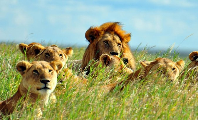 5 Days Go On An Exciting Camping And Wildlife Safari In Tanzania
