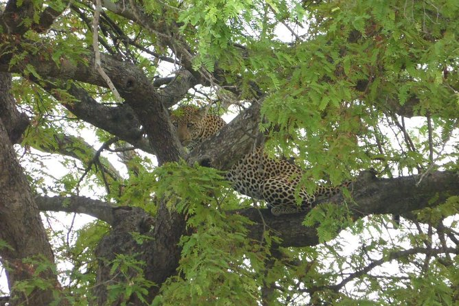 Short Safari from Dar es Salaam to Mikumi National Park - 2 Days