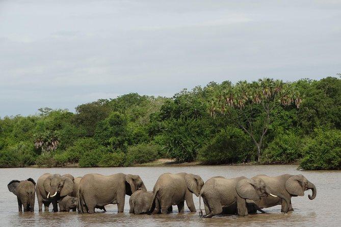 Safari in Mikumi Np, Udzungwa Mountain NP and Selous GR (Nyerere NP) 6 Days.