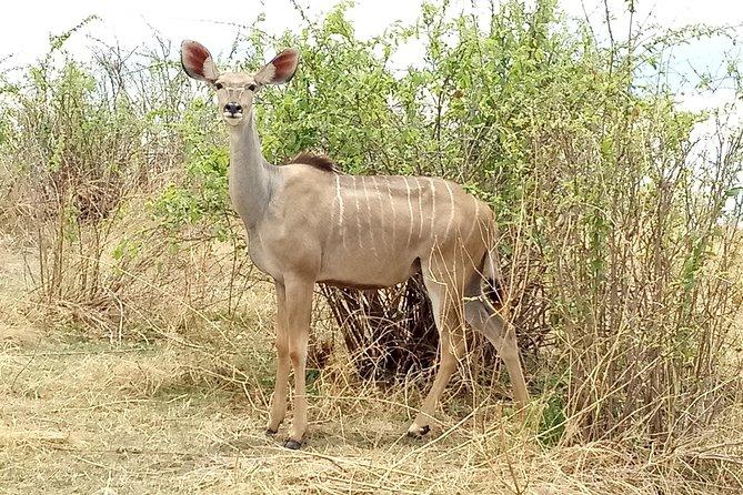 10 days Safari to Nyerere NP, Ruaha NP, Udzungwa NP and Mikumi NP + Isimila Site