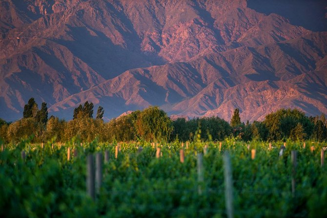 Half-Day Wine Road Premium Tour From Cafayate