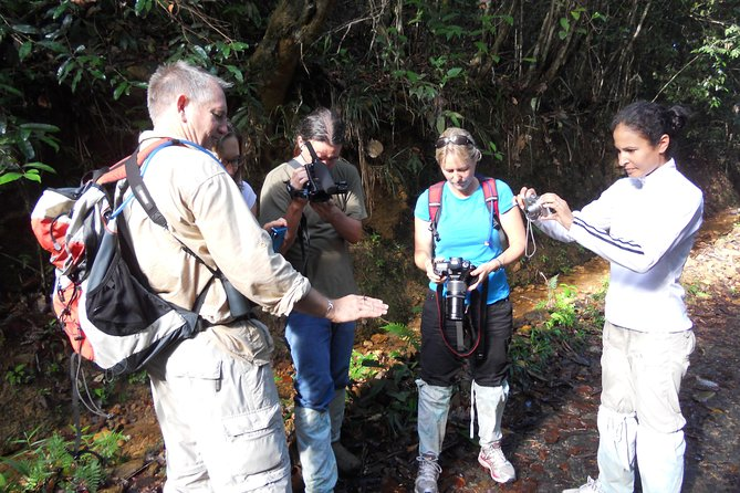 Great southern Sinharaja Rainforest exploration