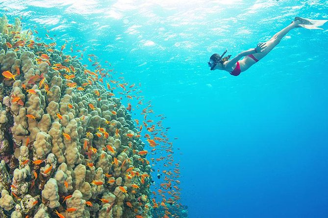 The Best Places Where to Snorkel and Dive