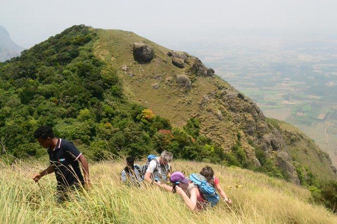 Birding & Trekking in Kerala
