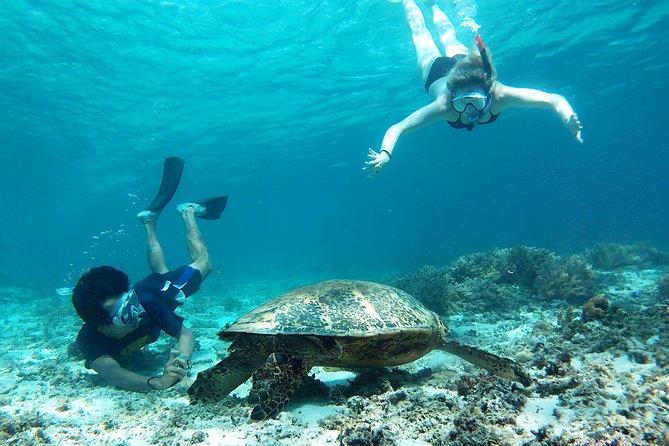 Snorkeling with Turtles on Gili Trawangan