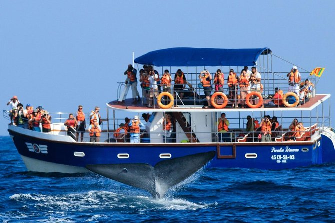 Mirissa Whales & Dolphin Watching day trip from Kalutara & Wadduwa- All Inclusive