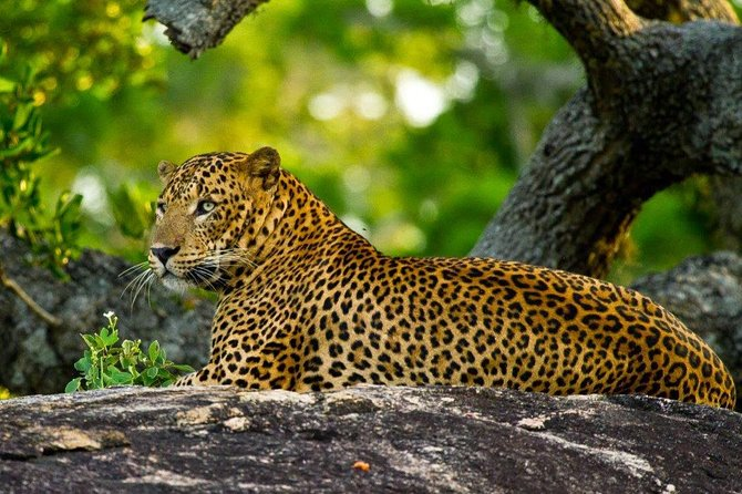 2 Days Tour to Yala Safari & Galle Dutch Fort From Bentota & Surroundings- All Inclusive