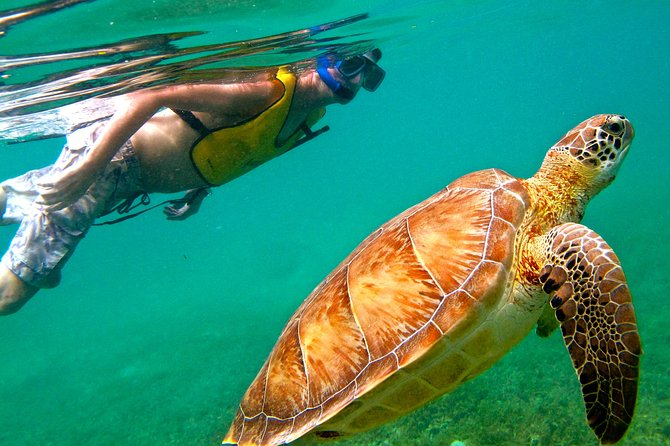 From Playa del Carmen: Visit a Cenote and Swim with Turtles in Akumal photo 1