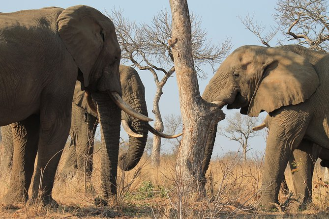 Meio Dia Safari No Parque Nacional Kruger Entrada Do Parque