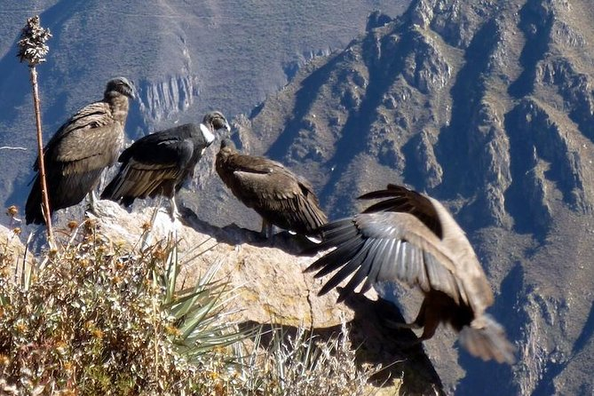 Full day Colca Canyon tour from Arequipa photo 1