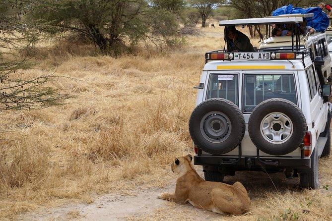 5 Days Tanzania Family Wildlife Safari Package