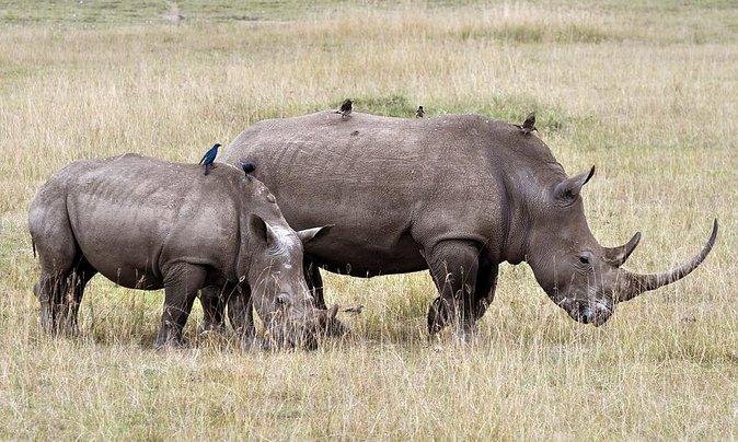 3 Day Tanzania Budget Safari