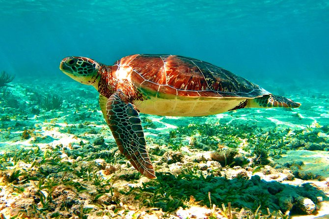 From Playa del Carmen: Visit a Cenote and Swim with Turtles in Akumal photo 3