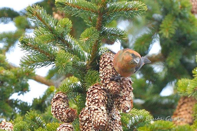 Sibiu birding day