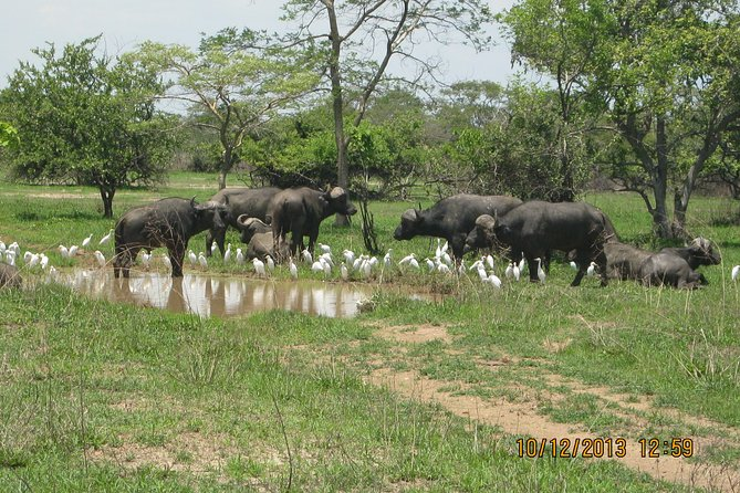 Travel to the wilderness and unexplored Kafue National Park in Zambia, Africa