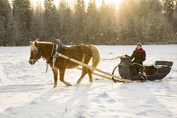 Winter Tour and Sleigh Ride in St Petersburg