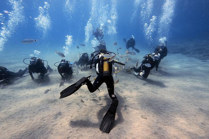 Try dive with Dive College